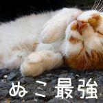 けものフレンズ見れば『ネコ科動物が一番可愛い』という圧倒的事実に納得できるよね♪