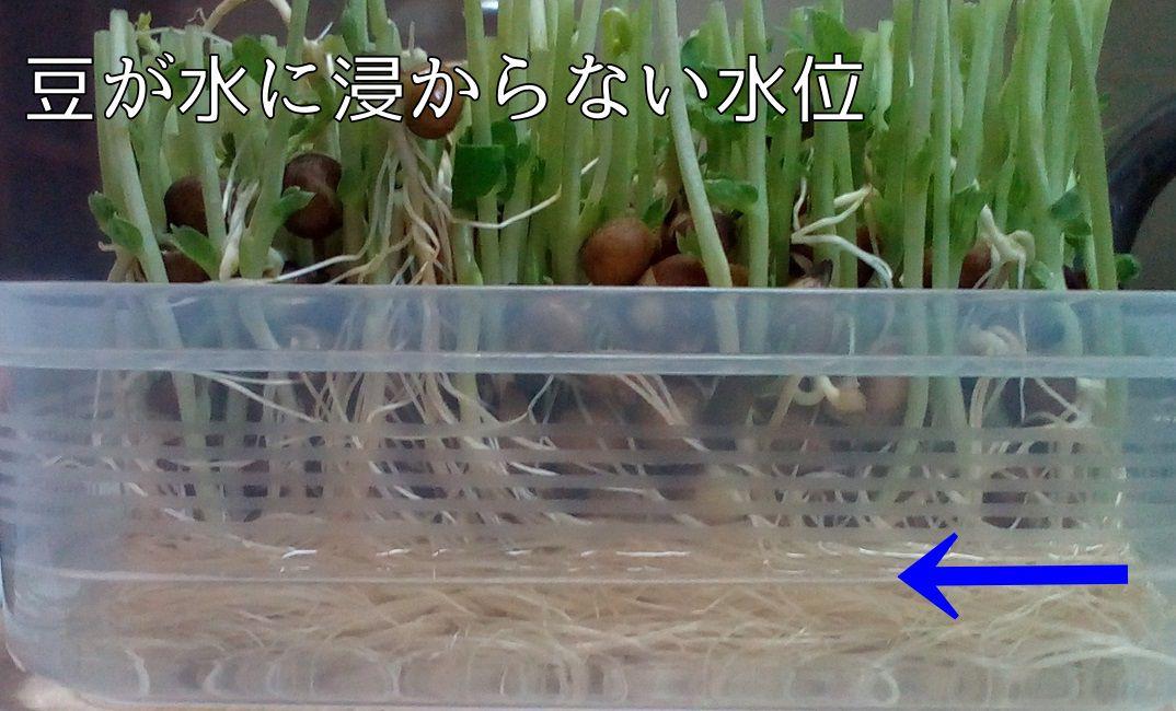 苗 ない 豆 育た ソラマメの育て方・栽培方法|失敗しない栽培レッスン(野菜の育て方)|サカタのタネ 家庭菜園・園芸情報サイト