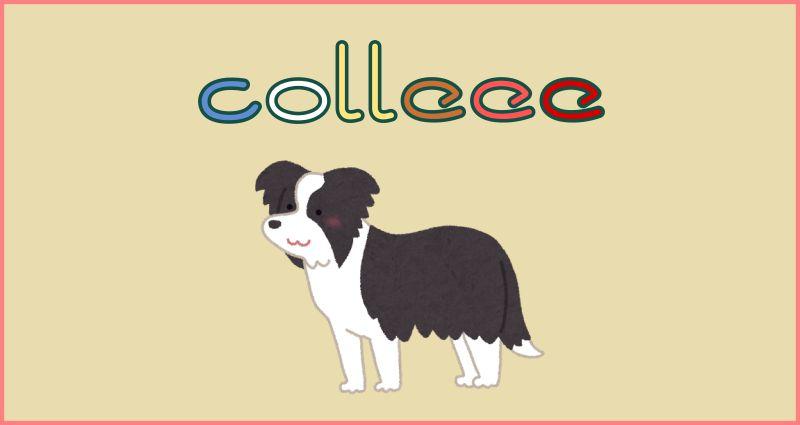 予想ネットがcolleee(コリー)にリニューアル。これはヒドいwログイン・換金ができない場合も。
